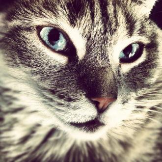 tablou canvas Feline Beauty NWA 016