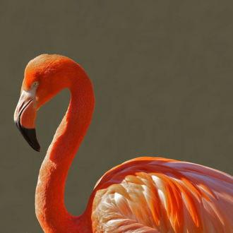 tablou canvas Flamingo NBR-003