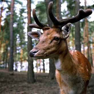 tablou canvas Bambi NWA 005 1
