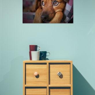 tablou canvas Dreaming puppy NWA 022 mockup 1