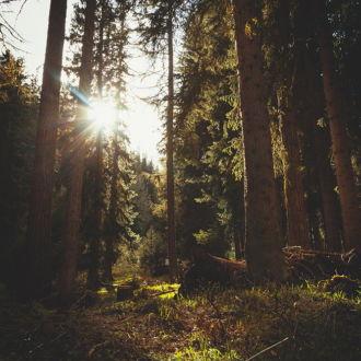 tablou canvas Forest sunlight NLS 001 1