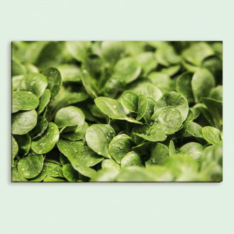 tablou canvas Fresh Leaves FVE 007 mockup 1