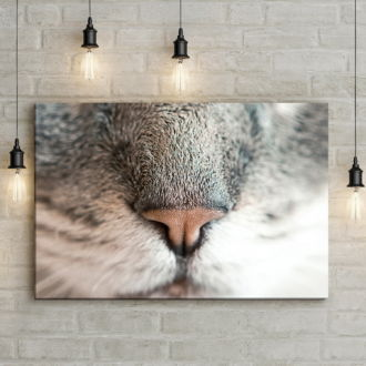 tablou canvas Kitty Nose NWA 015 mockup 1