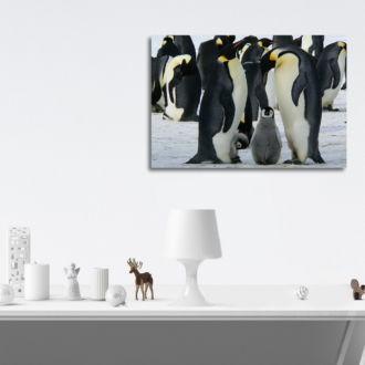 tablou canvas Penguin family NBR 001 mockup 1