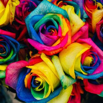 tablou canvas trandafiri multicolori NFL 030 1
